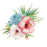 Watercolor tropical flowers Royalty Free Stock Photography