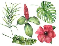 Watercolor tropical flowers and leaves. Hand painted monstera, coconut and banana palm branch, hibiscus, alpinia. Isolated on white background. Floral exotic stock illustration