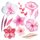 Watercolor tropical flowers, leaves and plants. Set of Watercolor hand painted tropical flowers, leaves and plants in pink colors. Bright jungle exotic clip art Royalty Free Stock Images