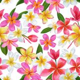 Watercolor Tropical Flowers Seamless Pattern. Floral Hand Drawn Background. Exotic Plumeria Flowers Design for Fabric Stock Images