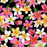 Watercolor Tropical Flowers Seamless Pattern. Floral Hand Drawn Background. Exotic Plumeria Flowers Design for Fabric Stock Photography