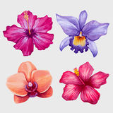 Watercolor tropical flowers. Vector Stock Images