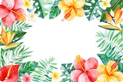 Free Watercolor Tropical Frame Border Stock Image - 108069301
