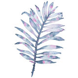 Watercolor tropical hand painted indigo leaf isolated on white background
