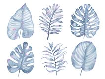 Watercolor tropical hand painted indigo palm tree leaf set isolated on white background