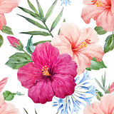 Watercolor tropical hibiscus pattern Stock Image