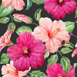 Watercolor tropical hibiscus pattern Royalty Free Stock Images