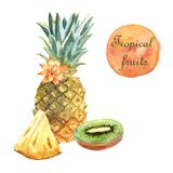 Watercolor tropical illustration with pineapple on a white background royalty free illustration
