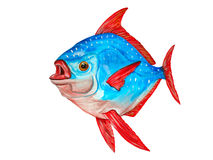 Watercolor tropical Lampris regius fish on white background. Han Royalty Free Stock Images