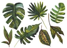 Watercolor tropical leaf set. Drawing of unusual leaves isolated on white background. Hand painted exotic leaves illustration royalty free illustration