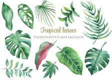 Watercolor tropical leaves and flowers. Banana, Monstera, Plumeria, Protea, Heliconia, Hibiscus on a white background. Perfect for cards, invitations, wedding