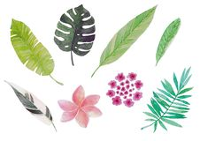 Watercolor tropical leaves and flowers stock illustration