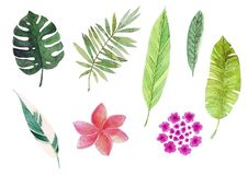 Watercolor tropical leaves and flowers. royalty free illustration