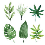 Watercolor tropical leaves Royalty Free Stock Photo