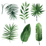 Watercolor tropical leaves Royalty Free Stock Photos