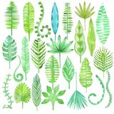 Watercolor tropical  leaves. Jungle set Royalty Free Stock Photography