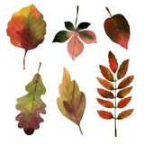 Watercolor tropical leaves seamless Royalty Free Stock Photography