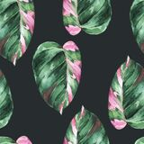 Watercolor tropical leaves seamless pattern. Philodendron pink princess
