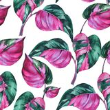 Watercolor tropical leaves seamless pattern. Philodendron pink princess botanical wallpaper