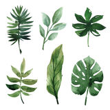 Watercolor tropical leaves Stock Photography