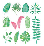 Watercolor tropical leaves on white background. royalty free illustration