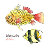 Watercolor tropical marine fish Painting sketch.  Royalty Free Stock Image