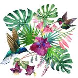 Watercolor tropical narute illustration Royalty Free Stock Photo