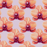 Watercolor tropical orchid flower seamless pattern. Royalty Free Stock Photos