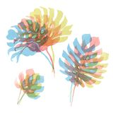 Watercolor tropical palm leaf set. Beautiful set with hand drawn watercolor tropical palm leaves royalty free illustration