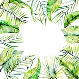 Watercolor tropical palm leaves frame border. Hand painted on a white background, greeting card design Stock Images