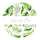 Watercolor tropical palm leaves frame. Hand painted on a white background Stock Image