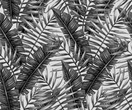 Watercolor tropical palm leaves seamless pattern Royalty Free Stock Image