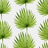 Watercolor tropical palm leaves seamless pattern Stock Photos