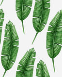 Watercolor tropical palm leaves seamless pattern Royalty Free Stock Photo