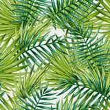 Watercolor tropical palm leaves seamless pattern. Stock Image