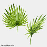 Watercolor tropical palm leaves. Royalty Free Stock Photography