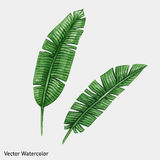 Watercolor tropical palm leaves. Vector illustration Royalty Free Stock Photo