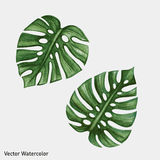 Watercolor tropical palm leaves Stock Images