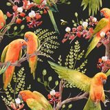 Watercolor tropical parrots pattern royalty free illustration