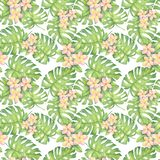 Watercolor tropical pattern, plumeria, leaves monstera Pattern. Watercolor illustration of tropical pattern, plumeria, leaves monstera Pattern. Drawing for royalty free stock images