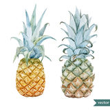 Watercolor, tropical, pineapple, exotic, pattern. Beautiful  tropical pattern with flowers and pineaples Royalty Free Stock Images