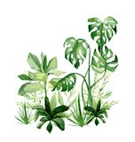 Watercolor tropical plants. Africa summer greenery jungle savannah illustration for the banner, frame