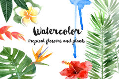 Watercolor tropical plants Stock Image