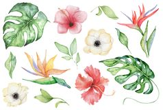 Watercolor tropical plants set. Exotic flowers, monstera and palm leaves