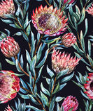 Watercolor tropical protea pattern Royalty Free Stock Photography