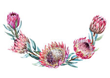 Watercolor tropical protea wreath Royalty Free Stock Images