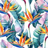 Watercolor tropical seamless pattern with bird-of-paradise flower. Exotic flowers, leaves on white background. Hand painted natural illustration stock illustration