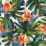 Watercolor tropical seamless pattern with bird-of-paradise flower, monstera, palm leaf. Exotic flowers, leaves on light background. Hand painted natural stock illustration
