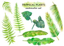 Watercolor tropical set with fern, coconat, banana and liana leaves. Hand drawn illustration isolated on white background royalty free illustration