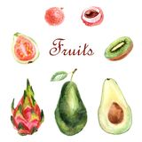 Watercolor tropical set of fruits on a white background royalty free illustration